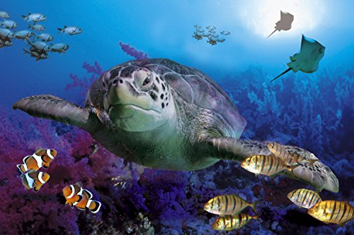 CHOIS Custom Films CF3053 Animal Fishes Seaturtle Glass Window Privacy Frosted 3' W by 2' H by CHOIS