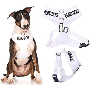 Amazon Com Blind Dog Dog Has Limited No Sight White