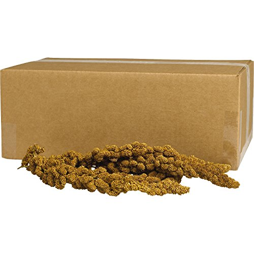 Spray Gold Millet (Kaytee Gold Spray Millet, 5 lbs)