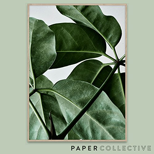 【PAPER COLLECTIVE】GREEN HOME 01/グリーンホーム01 50x70cm B072KD1Z77