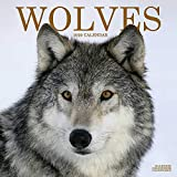 Wolf Calendar - Wolves Calendar - Calendars 2019 - 2020 Wall Calendars - Animal Calendar - Wolves 16 Month Wall Calendar by Avonside (Multilingual Edition)