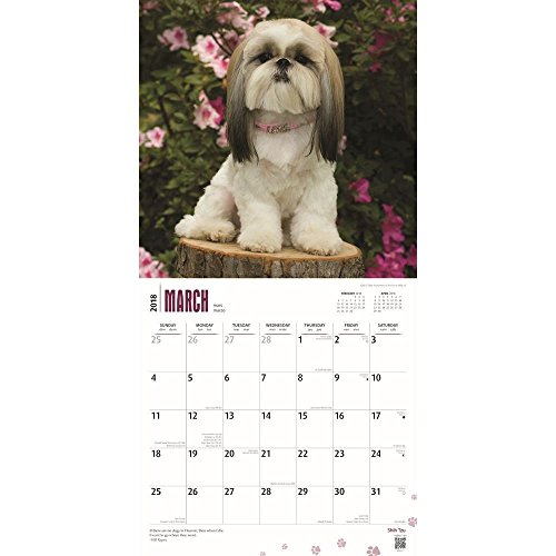 Shih Tzu 2018 Wall Calendar Photo #2