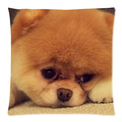 Boo The Dog Pet Dog Custom Pillow Cases Pillowcase Covers 45,7cm (Twin sides)