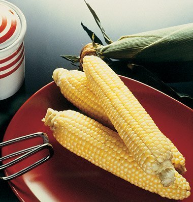 David's Garden Seeds Corn Sweet Sugar Buns DE267TYU (Yellow) 100 Hybrid Seeds