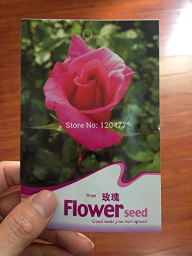 Exclusive use of the manufacturers of packaging, beautiful red roses seed, germination 100% - 10 seeds / bag - Exclusive Red Rose