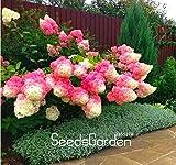 Kasuki Hot Sale! 20 PCS Vanilla Strawberry Hydrangea Flower Flores for Planting Flower Bonsai or Tree plantas Home Garden