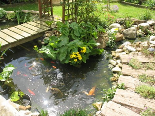 A guide to pond fish and how to care for them