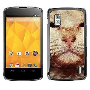 YiPhone /// Prima de resorte delgada de la cubierta del caso de Shell Armor - British Wirehair Cat Orange Whiskers - LG Google Nexus 4 E960