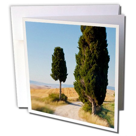danita-delimont-italy-winding-road-val-d-orica-tuscany-italy-6-greeting-cards-with-envelopes-gc-2276