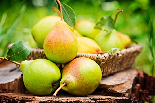 Organic Pears, 10 Pounds - California Sun-Dried Pear Halves, Non-GMO, Kosher, Unsulfured, Unsweetened, Non-Infused, Non-Oil Added, Non-Irradiated, Pesticide-Free, Vegan, Raw, Bulk by Food to Live (Image #6)