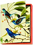 Boston International The MET Boxed Note Cards, Audubon Birds, 20-Count