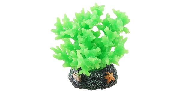 Amazon.com : eDealMax silicona acuario de cerámica Redondo Aquascaping Base Coral Flora, Verde : Pet Supplies