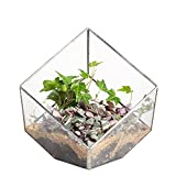 NCYP 5.9inches Squares Inclined Open Cube Clear Glass Geometric Terrarium Box Tabletop Succulent Plant Fern Moss Silver