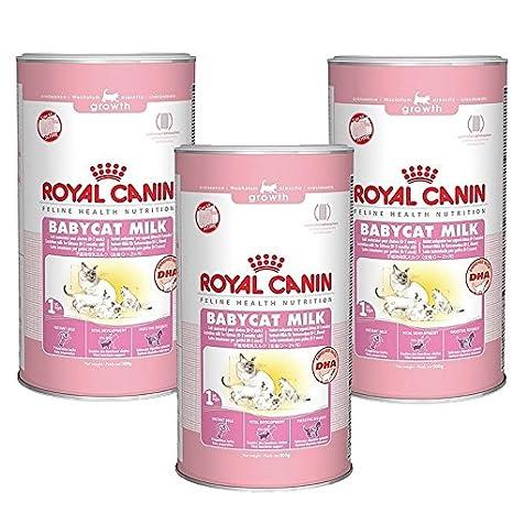 Royal canin felina salud nutrición Babycat leche: Amazon.es ...