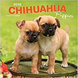 Amazoncom Chihuahua Puppies 2018 12 X 12 Inch Monthly Square Wall