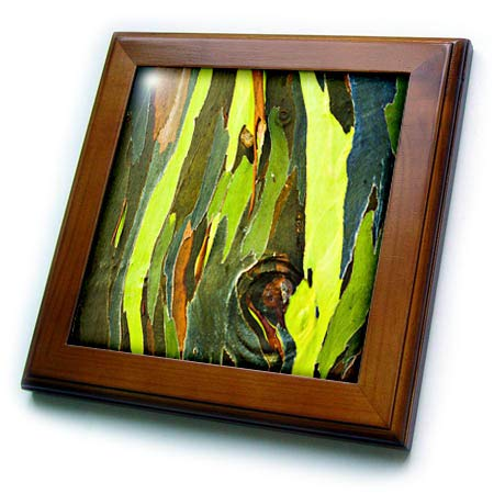 - 3dRose Danita Delimont - Natural Patterns - Rainbow Eucalyptus bark. Island of Kauai, Hawaii, USA - 8x8 Framed Tile (ft_314814_1)