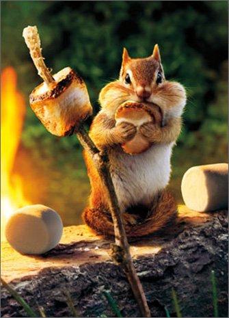 Chipmunk Roasts Marshmallow Funny Birthday