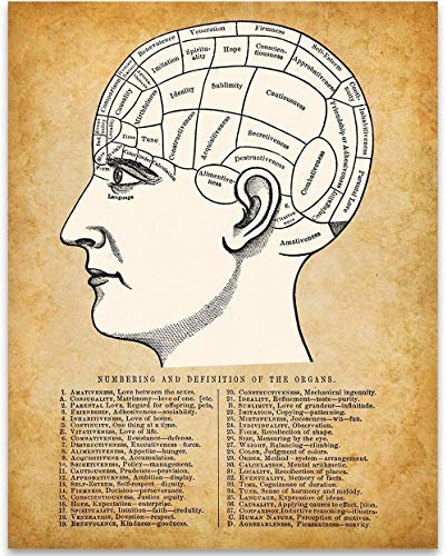 ion - 11x14 Unframed Art Print - Great Gift Under $15 for People Who are Into Phrenology Theory, Divination, Interpretive Science, Mental Faculties, Character Traits, Human Anatomy ()