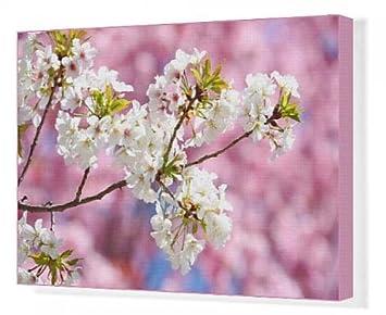 Impression Sur Toile De Sakura Fleurs De Cerisier Japonais A Tokyo