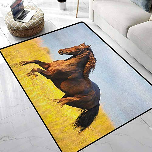 Horses Area Rugs for Sale 5x7 ft Friesian Horse with Mane Gallops in Meadow Equestrian Mystery Vitality Horse Printed Carpet