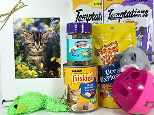 Cat Gift Box Basket for A Favorite Feline Fur Baby - Send These Treats and Toys to a Furry Cat/Kitten/Kitty Friend! Prime