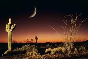Póster Arizona Silueta del Desierto 91,5x61cm