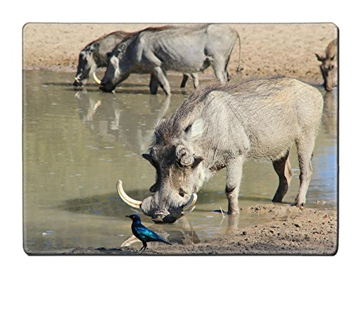 Luxlady Natural Rubber Placemat IMAGE ID: 20378064 Warthog family with a Boar closest Photographed in Namibia (Warthog Runners)
