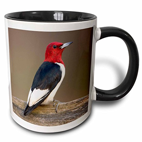 Red Headed Woodpecker - 3dRose