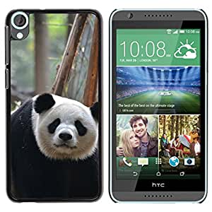 Hot Style Cell Phone PC Hard Case Cover // M00116228 Giant Panda Chengdu China Asia // HTC Desire 820