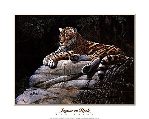 - Jaguar on Rock by Don Balke Art Print, 20 x 16 inches
