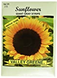Set of 100 Flower Seed Packets! Flower Seeds in Bulk (100, Sunflower)