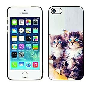 Vortex Accessory Carcasa Protectora Para APPLE iPHONE 5 / 5S - Maine Coon Kittens Blue Eyes Feline Cat -