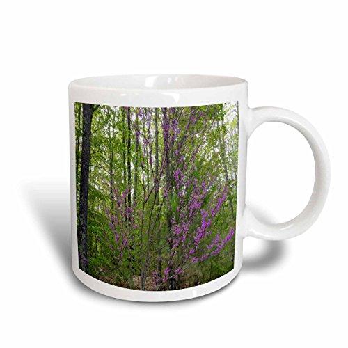 3dRose TDSwhite - Spring Seasonal Nature Photos - Early Spring Lilac Branches - 11oz Mug (mug_284255_1)