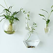 NewDreamWorld's Hexagon Wall Terrariums//Indoor Wall Bubble Bowl //Cone Wall Hanger Planters//Oval Glass Wall Vase//TV Wall Decorate//Housewarming Gift (meduim hexagon)