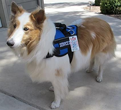 Image of: Fake Image Unavailable Amazoncom Amazoncom Classic Service Dog Harness Vest With Free Emotional