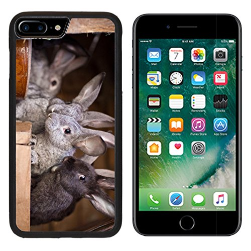 - MSD Premium Apple iPhone 7 Plus Aluminum Backplate Bumper Snap Case IMAGE ID: 11533654 Young rabbits popping out of a hutch European Rabbit Oryctolagus cuniculus