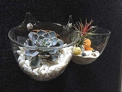 Amazon Large Opening Glass Bowl Vasewater Planting Wall