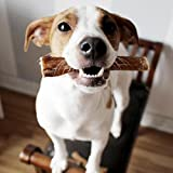 """5"""" Straight Bully Sticks for Dogs [X-Large"""
