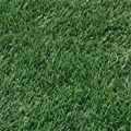 Outsidepride Blackjack Bermuda Grass Seed