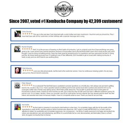 BREWMASTER SELECT Kombucha Continuous Brew Kit System - Drink Kombucha Tea On Tap (Making A Lifetime Of Home Brewed Kombucha Tea Easy For You) GetKombucha by Get Kombucha (Image #4)'