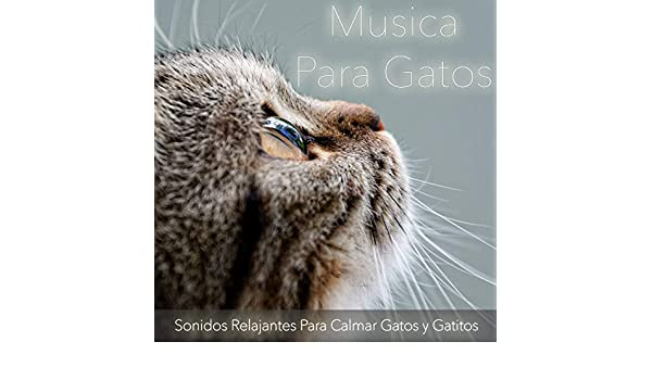 Canciones de Cuido para Gatos by Relax My Kitten, and Cat Music Dreams RelaxMyCat on Amazon Music - Amazon.com