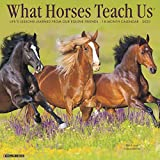 What Horses Teach Us 2020 Wall Calendar
