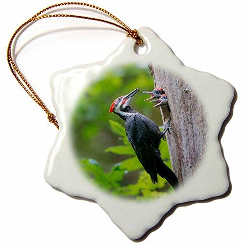 (3dRose Danita Delimont - Birds - Washington. Male Pileated Woodpecker feeds begging chicks. - 3 inch Snowflake Porcelain Ornament (orn_279684_1))