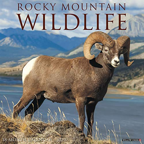 Rocky Mountain Wildlife 2020 Wall Calendar