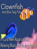 Clownfish and Blue Tang fish in coral reef aquarium tank relaxing music and finding nature