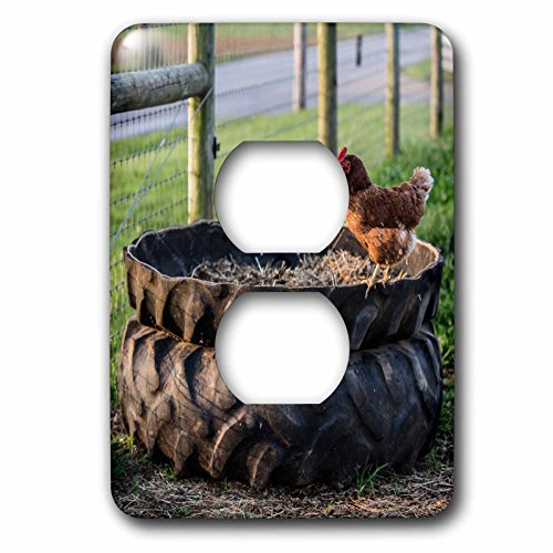 3dRose Danita Delimont - Chickens - Rhode Island Red hen in the barn yard, Lancaster Co., Pennsylvania. - Light Switch Covers - 2 plug outlet cover - Outlet Lancaster In