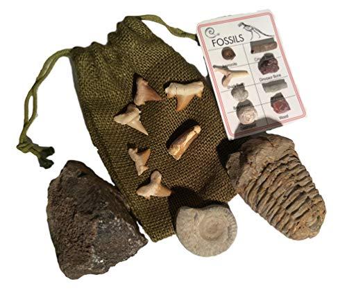 DINOSAURS ROCK Fossil Gift Collection – Genuine Dinosaur Bone, Spinosaurus Dinosaur Tooth, Ammonite, Trilobite, Shark Teeth with Bonus ID Chart – Gift Boxed