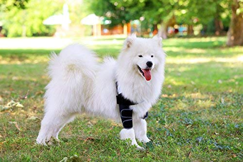 Buy kruuse elbow protector for dogs
