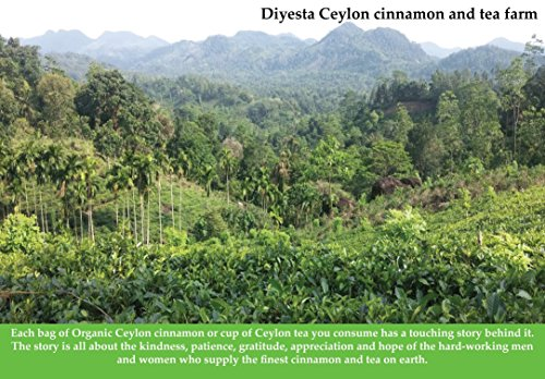 Organic Ceylon Cinnamon Powder - Family Owned Since 1935 - 1 Lb. in a Handy Re-sealable Pouch by Diyesta (Image #3)