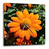 3dRose LLC Mexican Sunflower Flowers Flower Photography 10 by 10-Inch Wall Clock